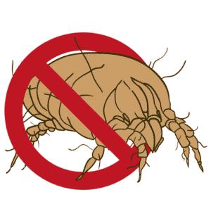 Milben erkennen und behandeln
