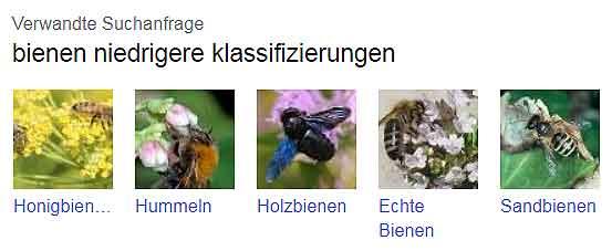 Bienenklassen Klassifizierung von Bienen im Bienensteckbrief