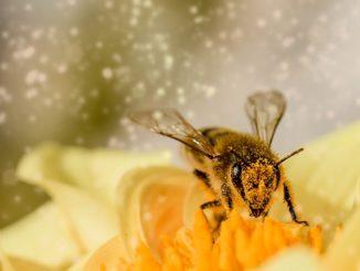 Bienensterben-Varroamilbe bedroht ganze Bienenvölker Bild